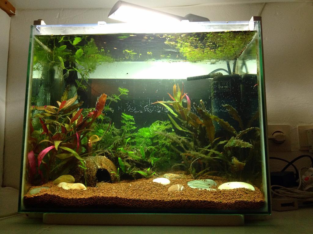 40l super fish home 40  BC21E2A5-6A33-46C5-856A-39D152E576CA_zps8f8wyh5t