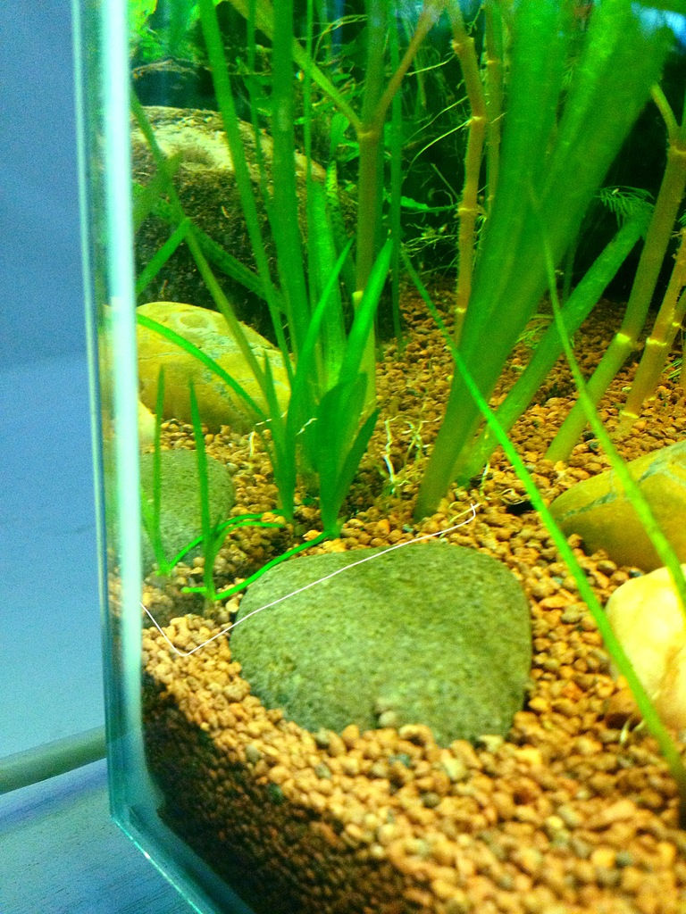 40l super fish home 40  - Page 4 C2B40335-26DD-4110-8517-CB2CA4D65B43_zpsy4gifoj2