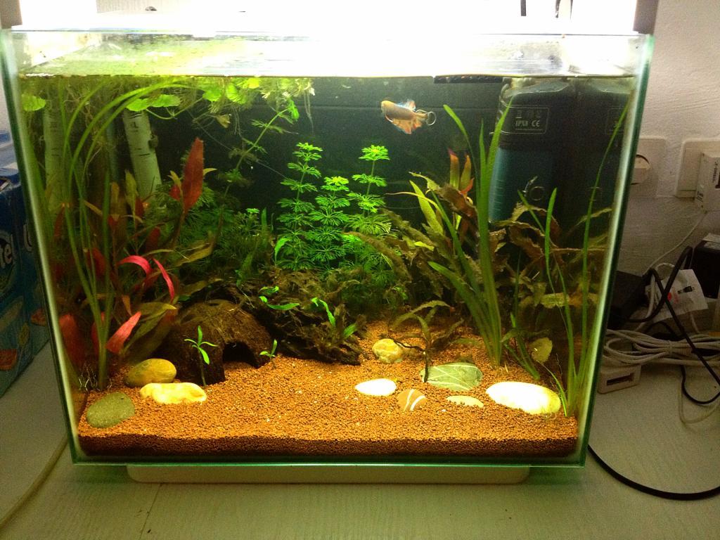40l super fish home 40  - Page 2 C5B27014-8045-4EE1-B271-4479E5B67BF2_zpssftikzc5
