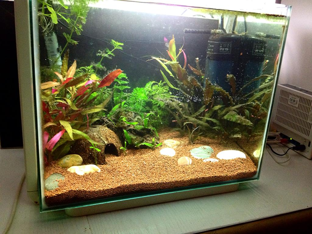 40l super fish home 40  DE761DB1-7AA7-42C5-9B6A-10F1579BCC61_zps6kbcbexp