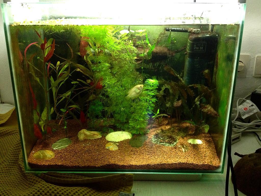 40l super fish home 40  E7F265C2-D39E-4678-B604-4DEAD6534629_zps0ob0tq5v