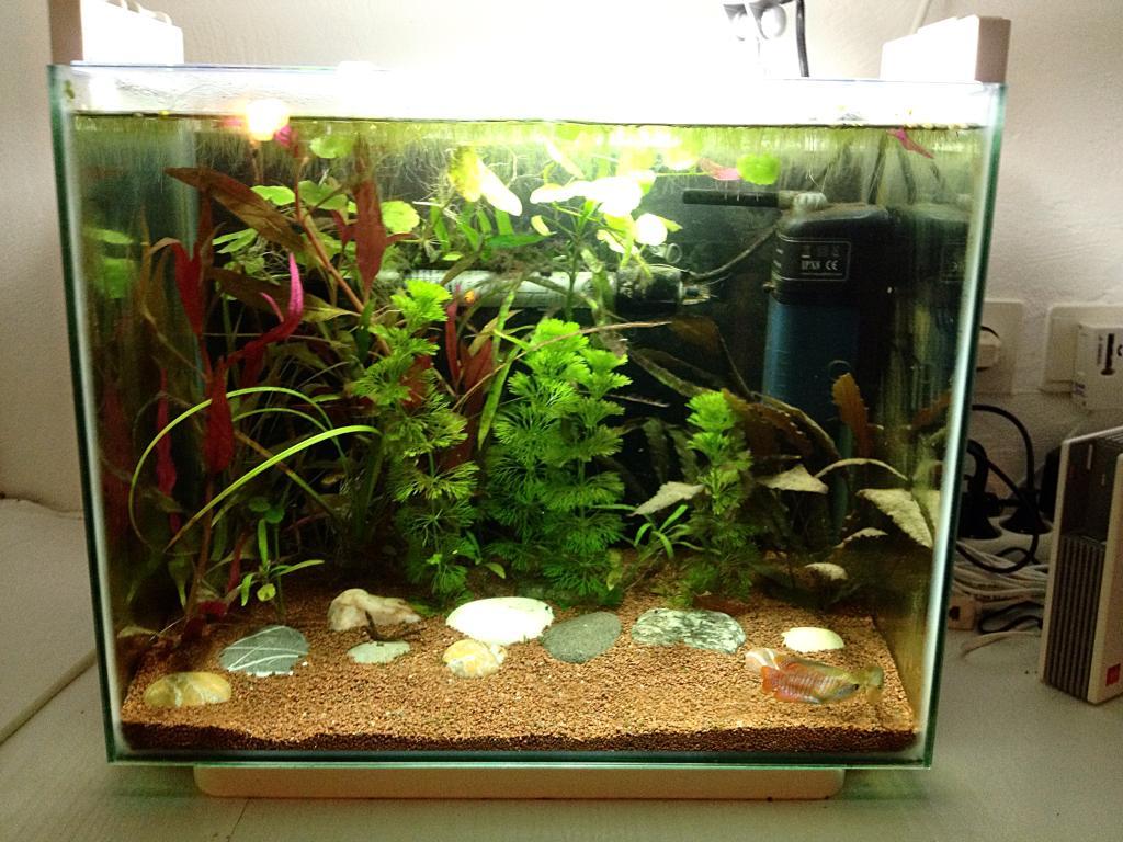 40l super fish home 40  FC173CFF-62B5-4945-9268-76545A96EDF6_zpsoeatqnns