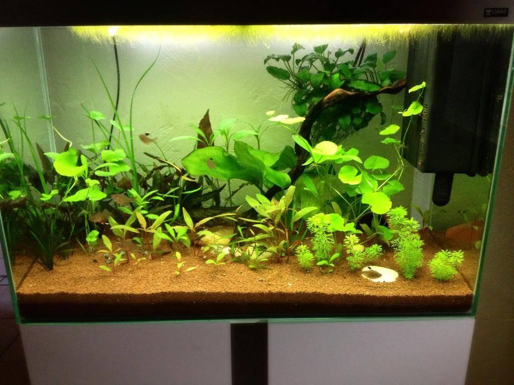 Mon 125l type amazonien avec quelques new plantes ! 374A6A38-6B7A-4347-9215-16F05674E842_zpsfqxp5sxs