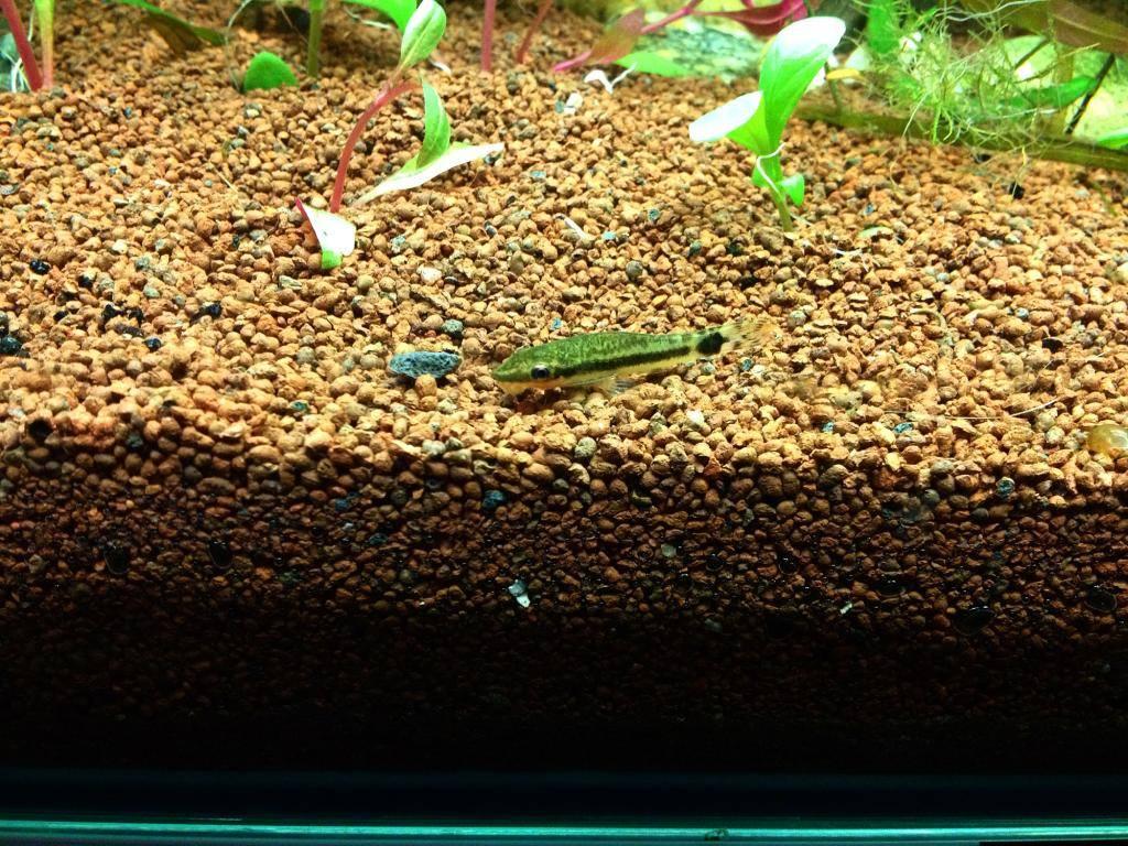 Mon 125l type amazonien avec quelques new plantes ! 38489813-41AA-48A2-91D3-B2F419DDC797_zpsftbbibco