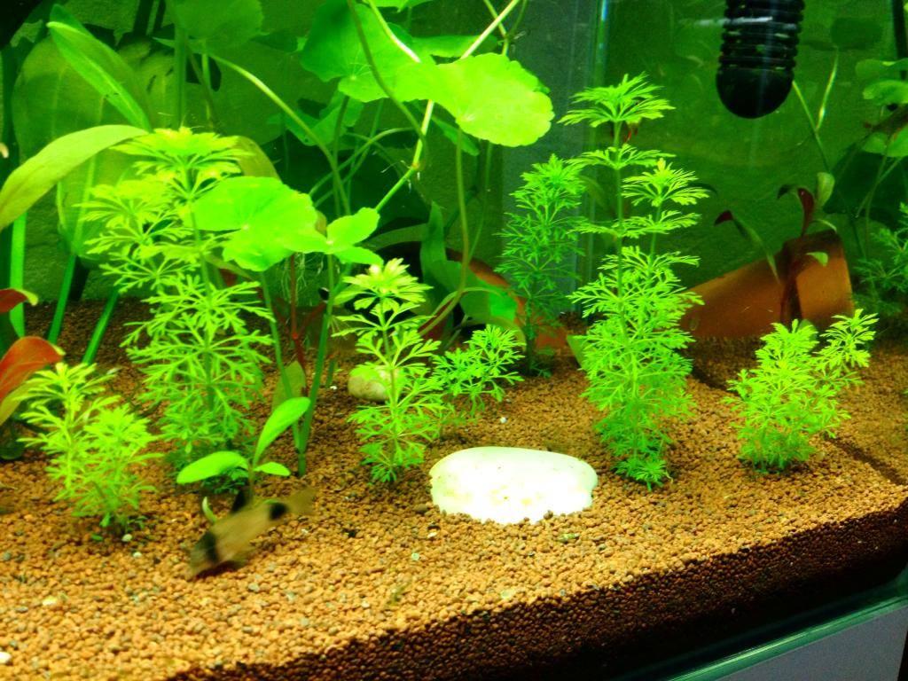 Mon 125l type amazonien avec quelques new plantes ! 3D7E4361-17FD-4702-B552-C3ABED257801_zps5jtq23ul