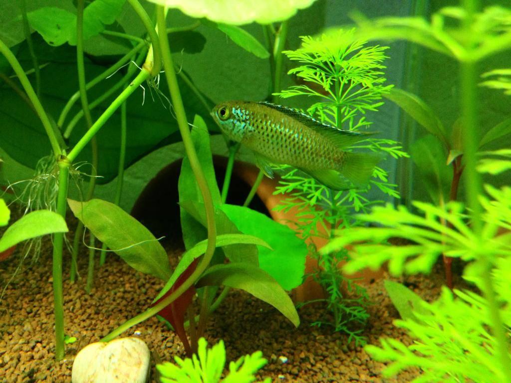 Mon 125l type amazonien avec quelques new plantes ! 83446836-9B5F-4525-AE25-63DFDCC6F128_zpsuq7lof5c