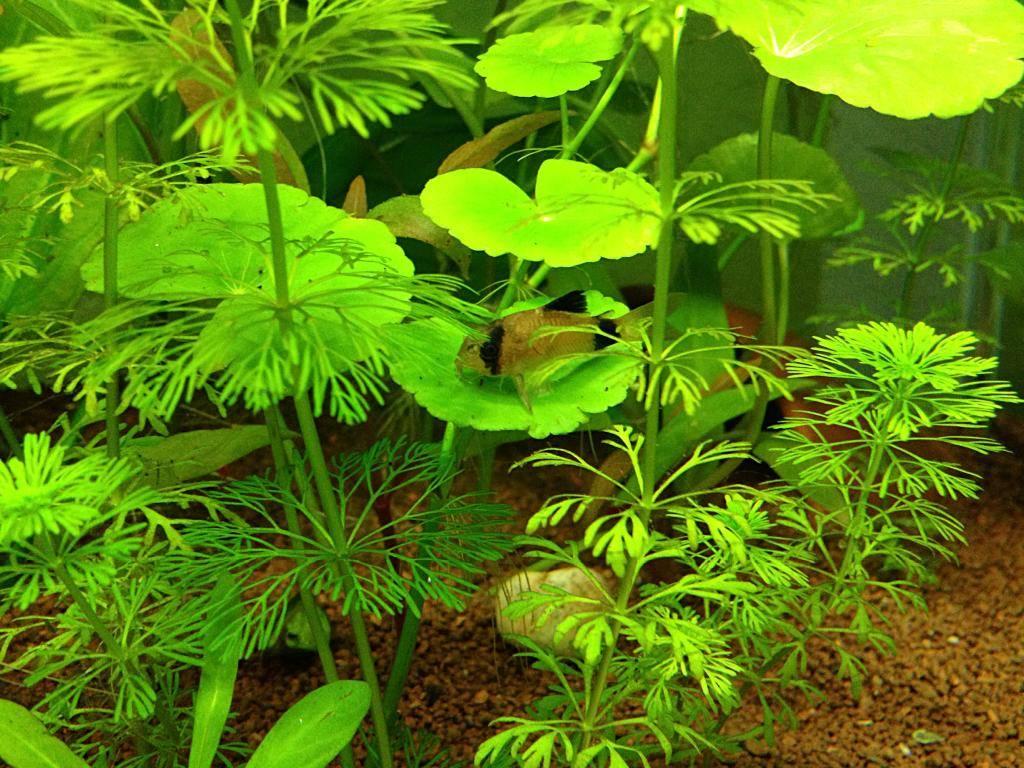 Mon 125l type amazonien avec quelques new plantes ! 873D685B-C680-41DA-8EC7-03C245B79F13_zpsfdr1hhcv