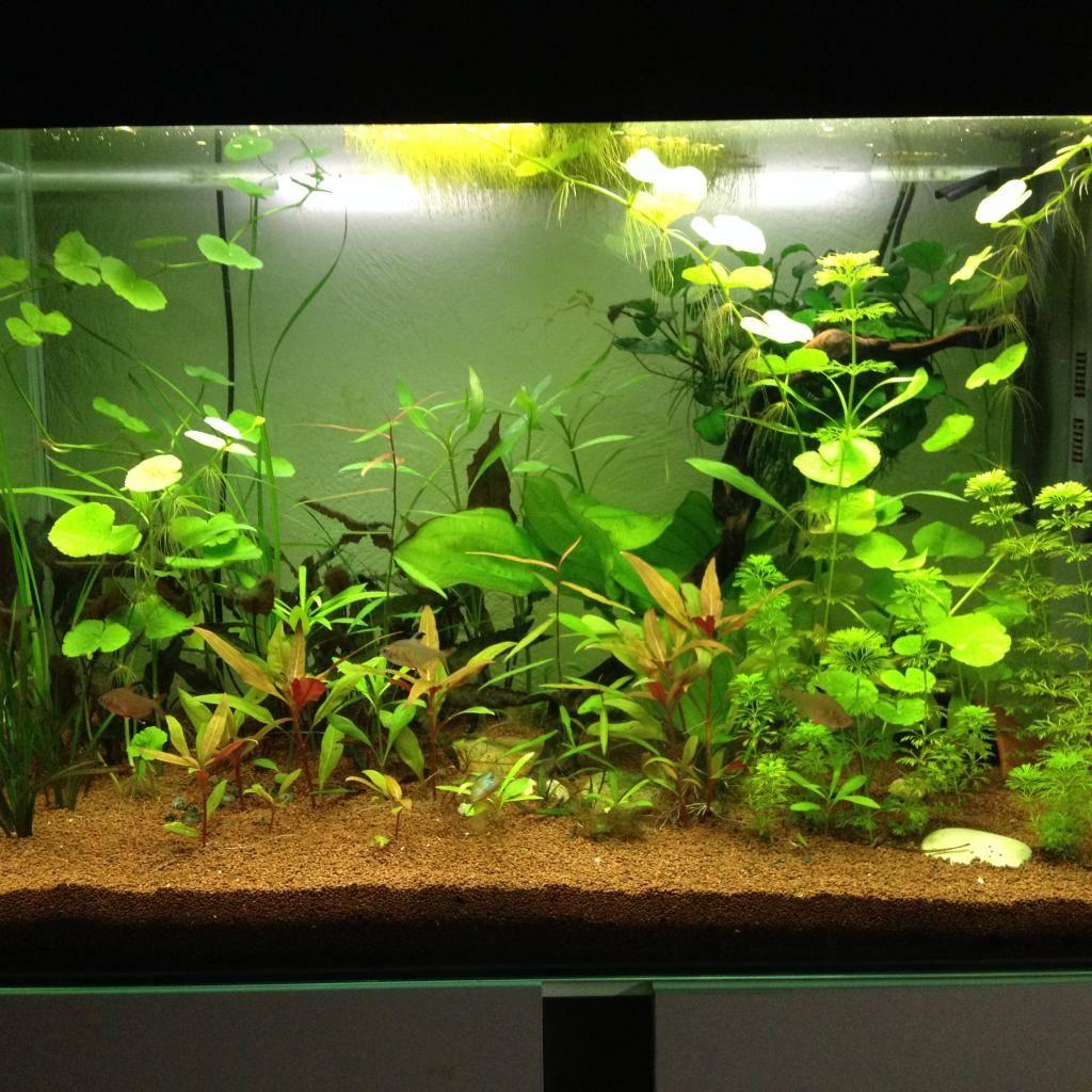 Mon 125l type amazonien avec quelques new plantes ! 93176B78-A4E1-4763-94B3-09E2813BACC7_zpsacsfihtm