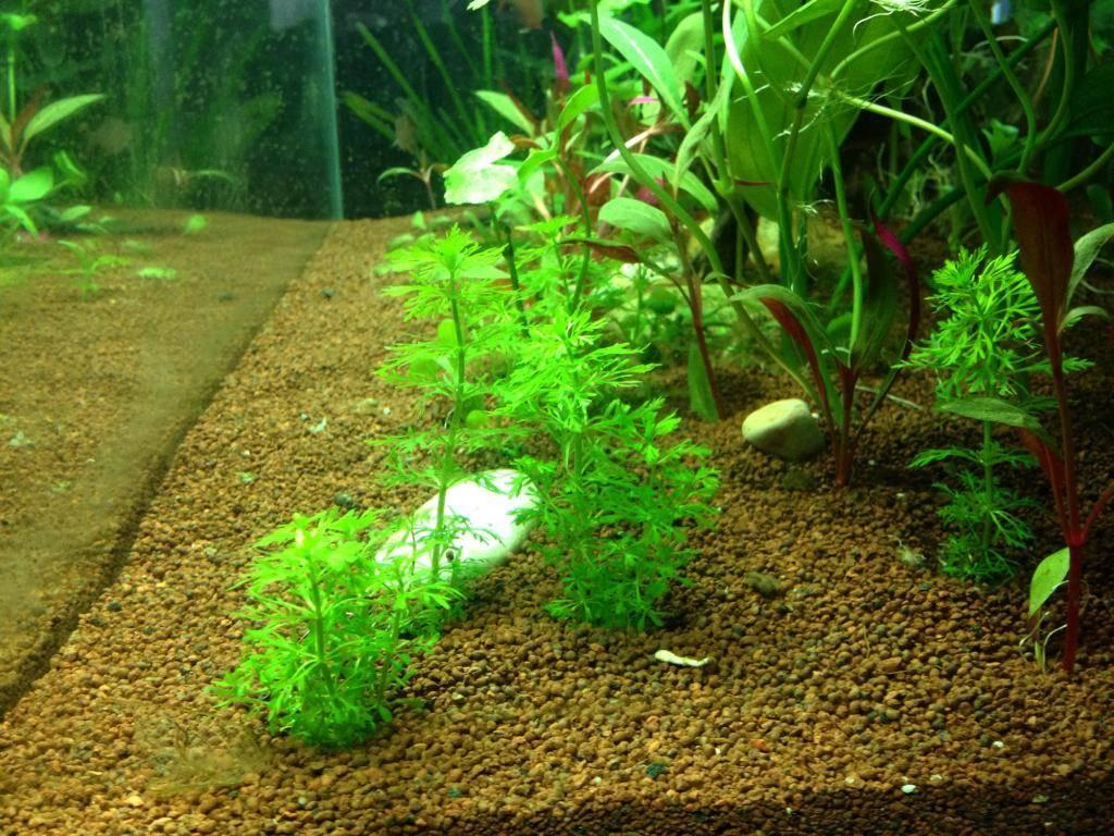 Mon 125l type amazonien avec quelques new plantes ! 98CEEEAD-A389-409B-8D9A-AE944FC01FCA_zps94y0uauz