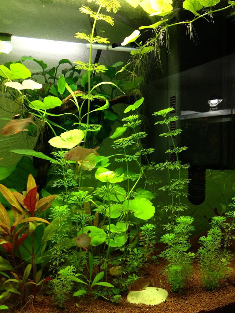 Comment jardinner cette plante ?  B1D2C6DA-98E2-4F11-BF08-9FAB3B935038_zps7q9a5ttw