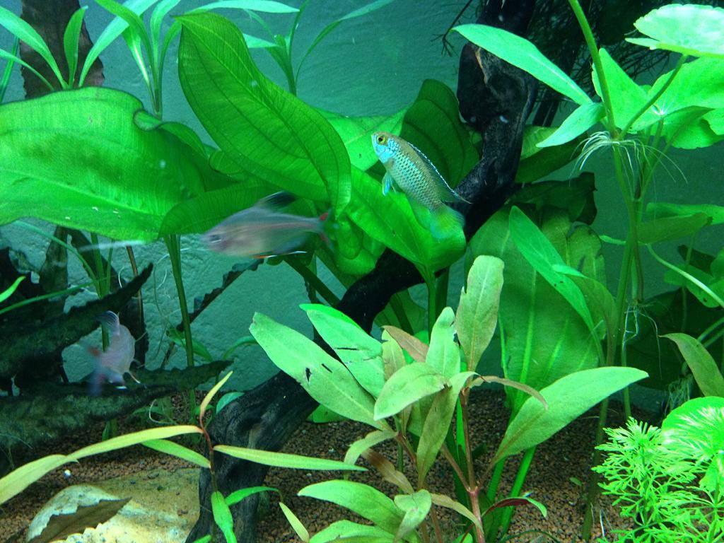 Mon 125l type amazonien avec quelques new plantes ! D110CB8A-F5AB-48A1-B93A-2064D3147AE9_zpsthejgxl7