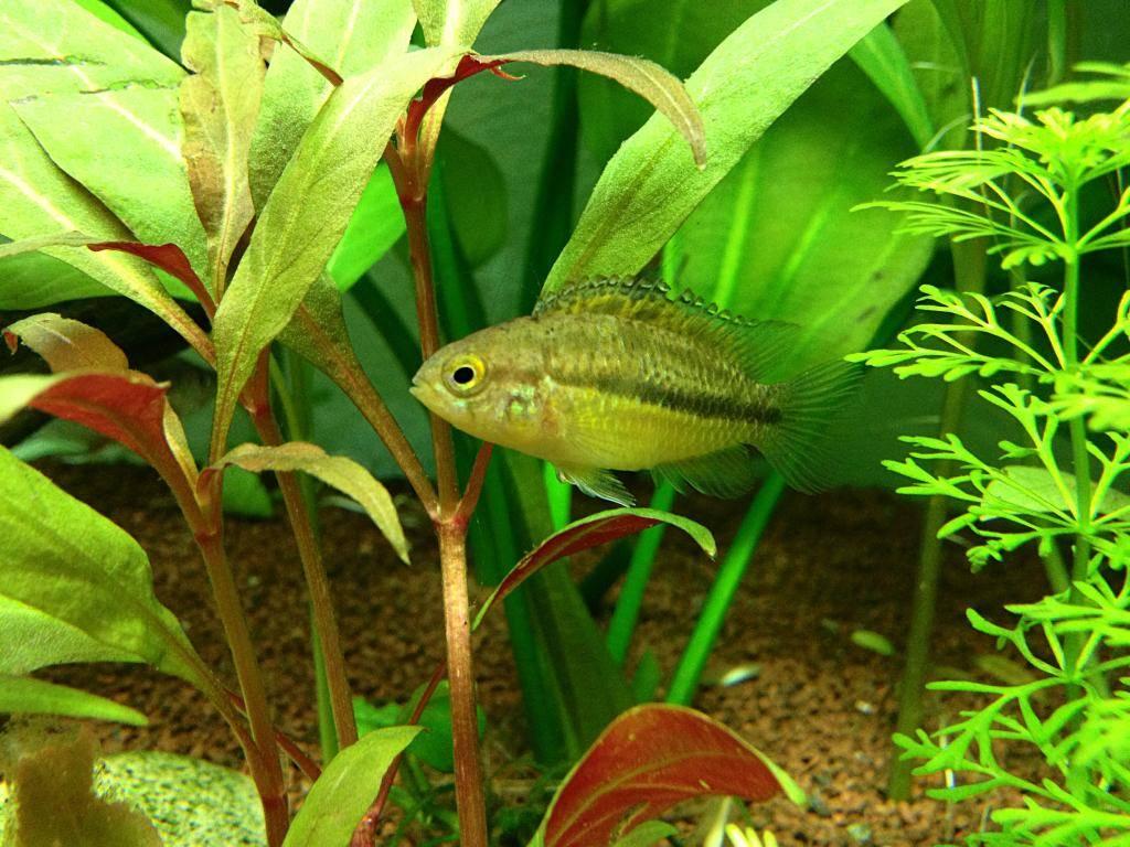 Mon 125l type amazonien avec quelques new plantes ! F8916331-6973-4825-B5D0-29FDBFBDF438_zpsupcz7bqo