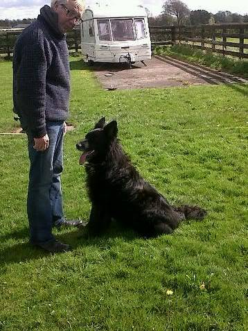 Mystical MAGIC - stunning GSD x Collie is looking for his forever friend IMG00451-20120411-15201