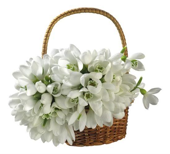 Картинки за любов, цветя и всяко нежно чуство 12c356a1ba93309c25e8aeab26e24353_we