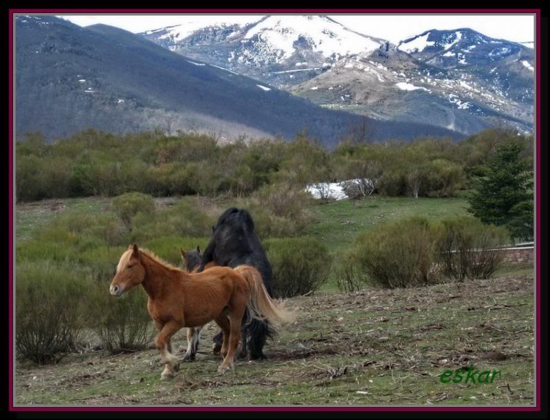 PEÑA TREMAYA 1443 mts (montaña palentina) P102