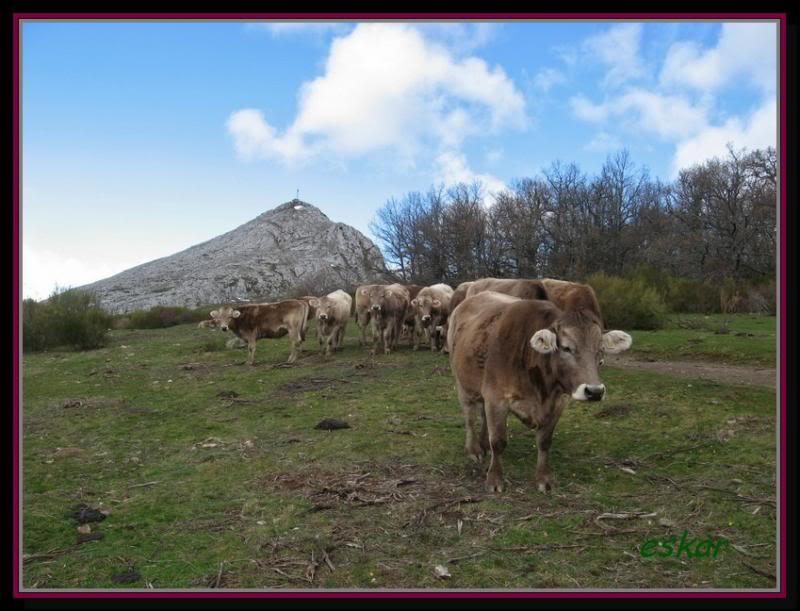 PEÑA TREMAYA 1443 mts (montaña palentina) P104