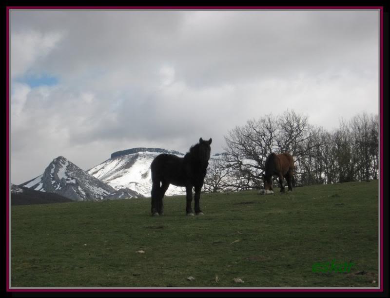 PEÑA TREMAYA 1443 mts (montaña palentina) P88