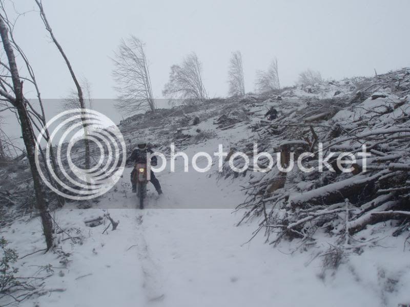 Pigging Snow P1310022