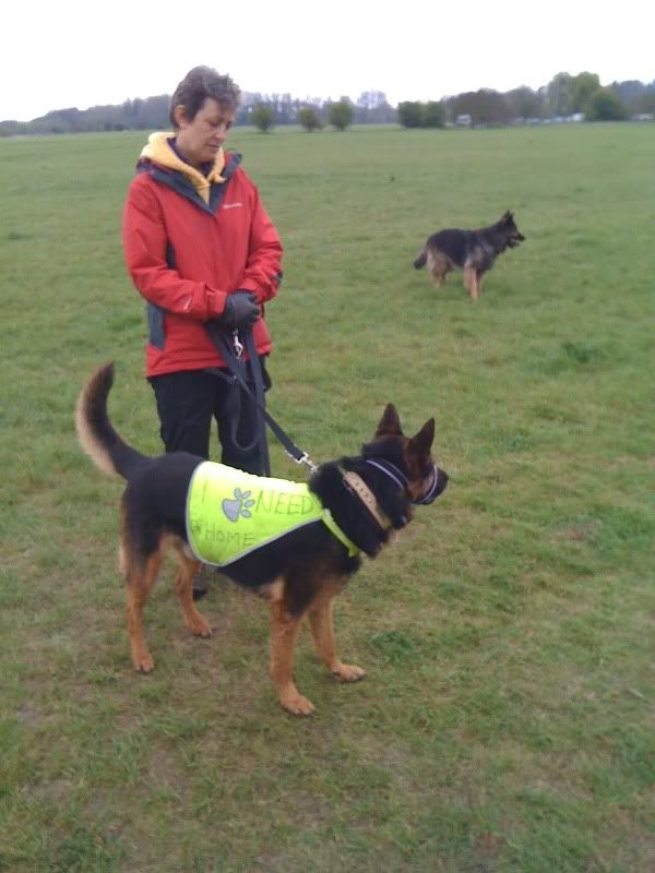 Rocky 6yr old homed Photo08-04-2012112225