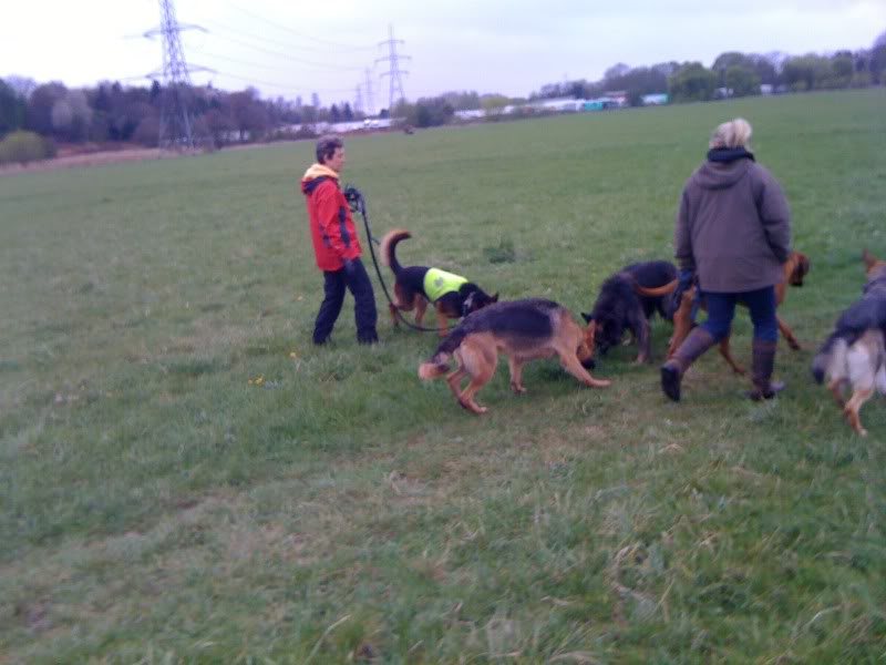 Rocky 6yr old homed Photo08-04-2012120052