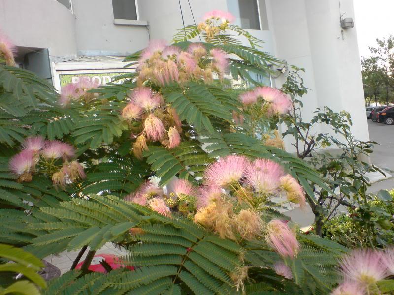 floraisons des arbres et des arbustes - Page 5 DSC01729_zps65849e46