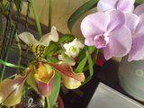 Identificare orhidee - Pagina 3 Th_DSC03774
