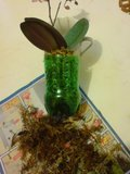 Orhidee Th_DSC02268_zpsd4869653