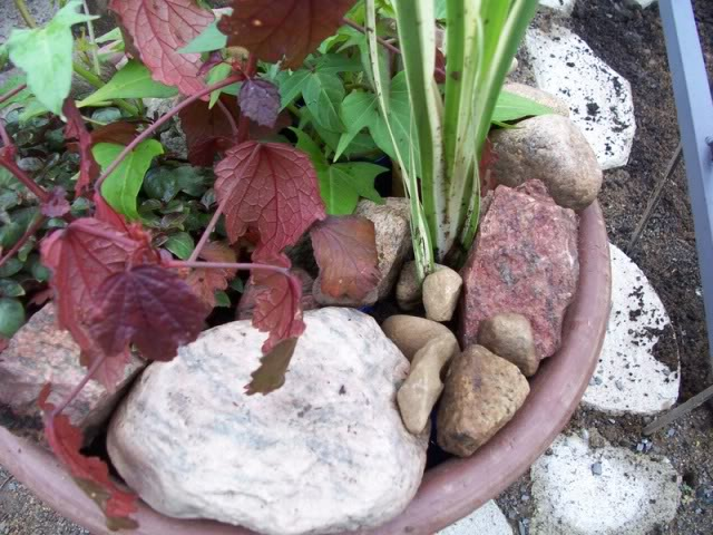 mon bassin d'eau en pot 016-1