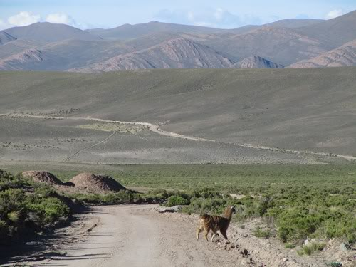 Ruta 40 Norte, algo de Bolivia y Chile 150