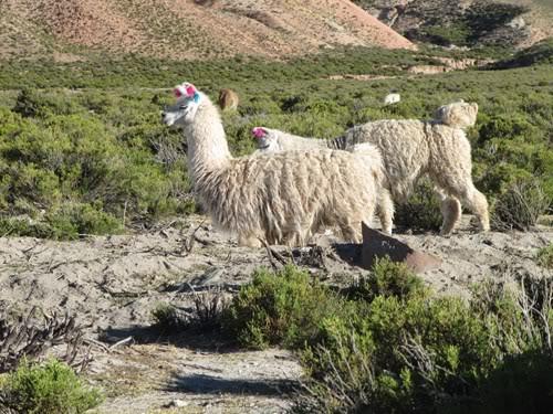 Ruta 40 Norte, algo de Bolivia y Chile 151