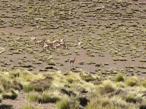 Ruta 40 Norte, algo de Bolivia y Chile 82