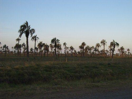 Uruguay Noviembre 2012 - Página 2 IMG_2299_zpsfab47ceb
