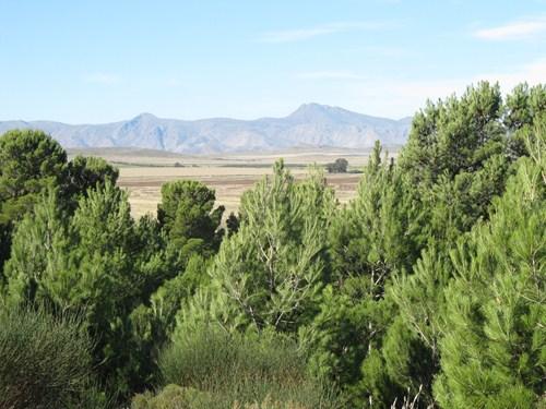 Viaje a Sierra de la Ventana.2014 IMG_9040_zps466bd046