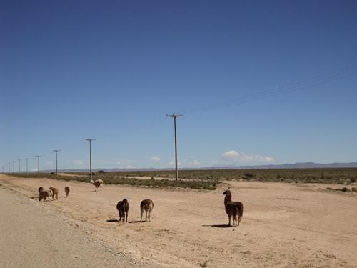 Ruta 40 Norte, algo de Bolivia y Chile DSC01351