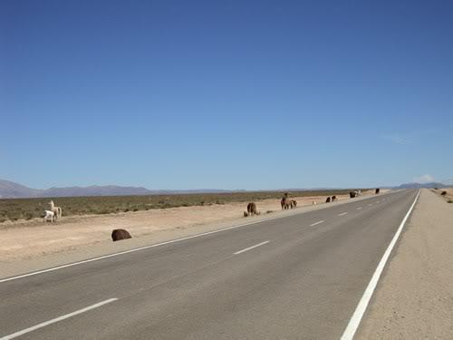 Ruta 40 Norte, algo de Bolivia y Chile DSC01352