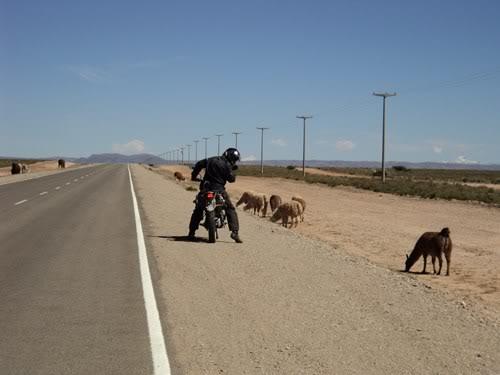 Ruta 40 Norte, algo de Bolivia y Chile DSC01353