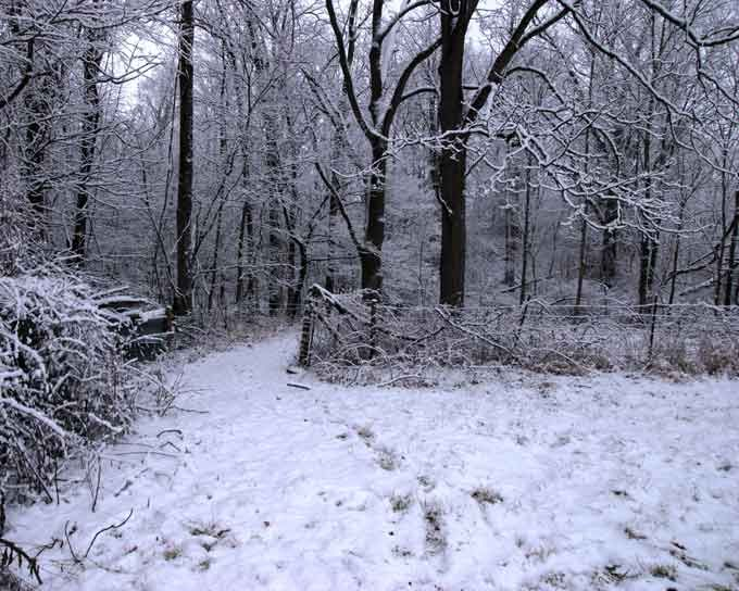 This is really a color picture. Web-snow-path5467
