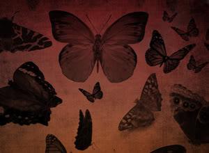 Tổng hợp Brush Butterfly-thumb