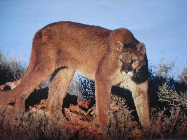 Pet Demonds Profiles Picture014