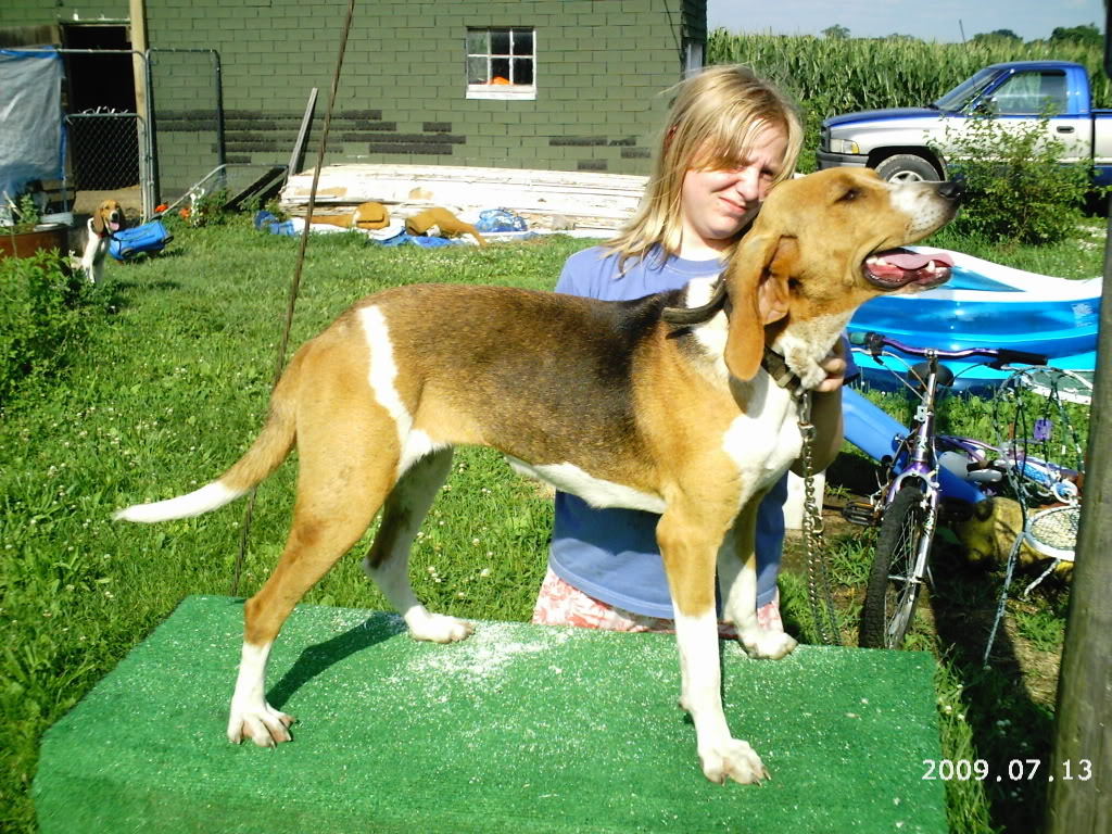 2 Walker Dogs stolen from Western Missouri Nightingaleright