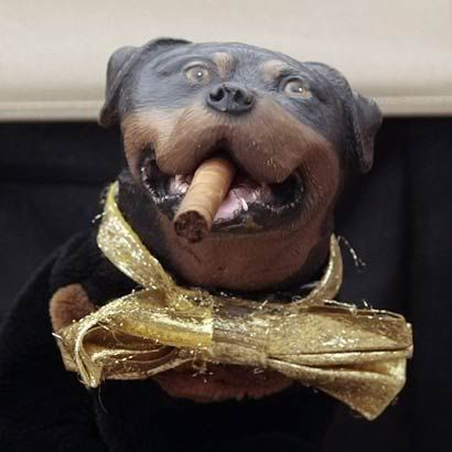 Woman marries dog 1515546
