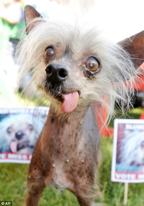 Pure-bred Miss Ellie wins title of World's Ugliest Pedigree Dog Article-1195929-05812393000005DC-12