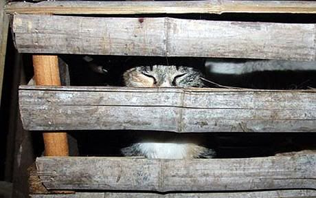 Hundreds of cats rescued from being eaten in China CatCage_1432891c