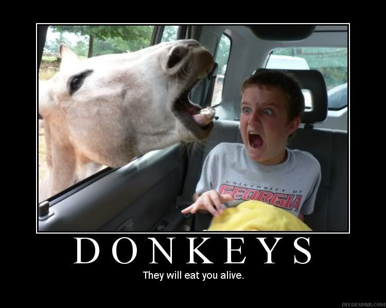WHO'S THAT POKe.. WAIT... WHAT THE HELL IS THAT!? MotivationalPosters-Donkeys