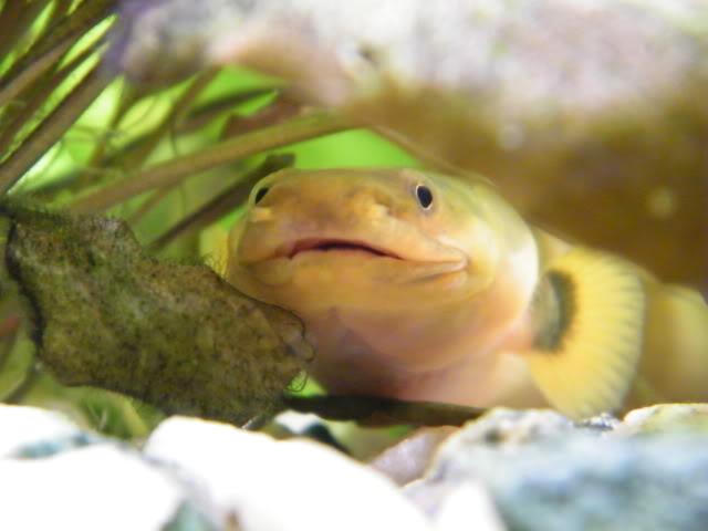 mes poissons (charlotte) 2009_0810maxipoissons0112