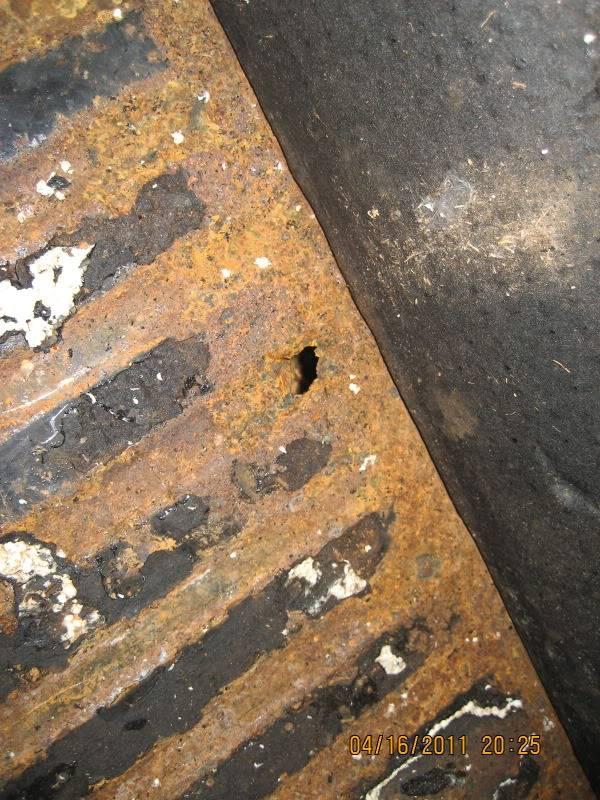 My 65 Beetle Leela IMG_5584