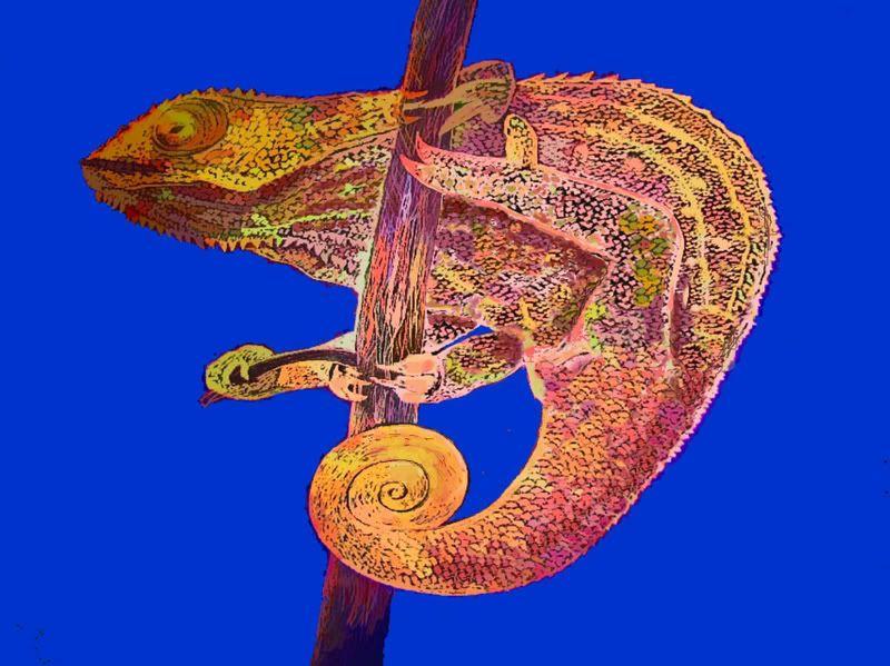 Some animal art of mine Chameleon6