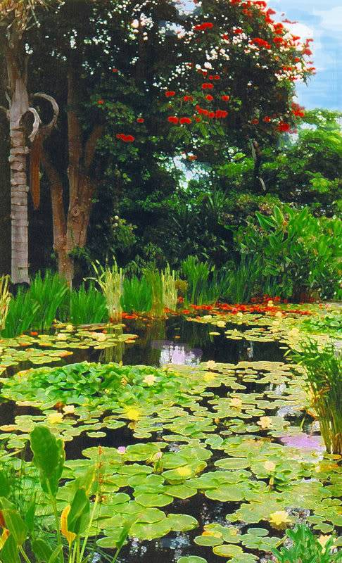 some of my artistic shots of wakefield Lily_pond_by_incredulous2