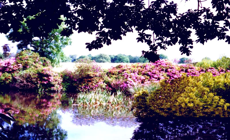 some of my artistic shots of wakefield Pond6
