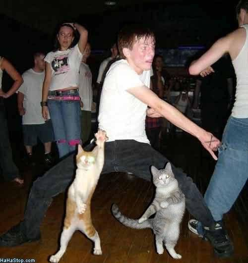 Random funny pictures! Cat_Dance_Off